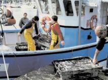 Adoption en commission du protocole de pêche entre le Maroc et l'UE