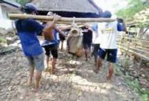 """Les """"Amish indonésiens"""" menacés de disparition"""