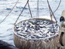 Petits pêcheurs et pisciculteurs à la traîne561