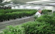 Canada : cannabis à des fins médicales, la bonne affaire