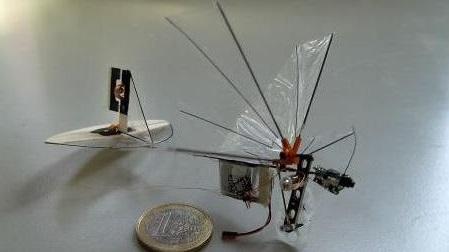 """Des scientifiques néerlandais s'envolent vers le futur avec un """"insecte-drone"""""""