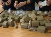 Plus de 500 tonnes de cannabis saisies en 2013