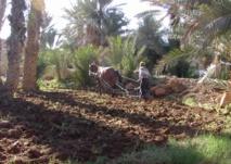 Ban Ki-moon appelle à soutenir  les petits agriculteurs