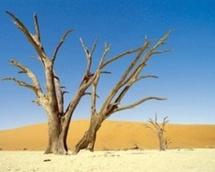 La société civile plaide en faveur de la conservation des zones humides