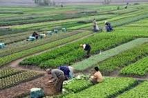 Les opportunités d'investissement dans l'agriculture exposées en Italie