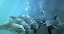 Le sifflement d'un dauphin traduit pour la première fois par ordinateur