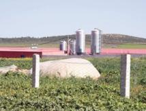 Ristou, un village hostile à l'industrie avicole