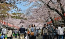 Le printemps au Japon: beauté des cerisiers en fleurs, douleur du rhume des foins