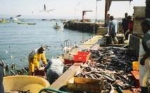 Baisse des débarquements de la pêche côtière et artisanale
