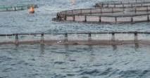 Le plan Aquaculture Maroc dévoilé à Tétouan
