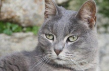 A Washington, les chasseurs de chats errants sont parmi nous