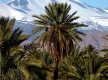 Deuxième édition du Festival de la palmeraie