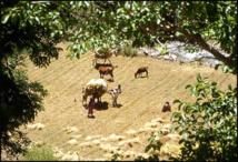 Tiwizi ou solidarité ancestrale