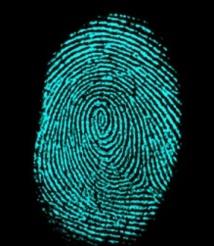 Les empreintes digitales, des preuves pas si fiables pour la police scientifique