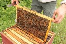 Le miel d'euphorbe, un produit du terroir très prisé au Maroc
