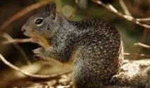 Insolite : Les écureuils  sont égaux