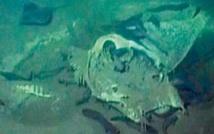 Découverte d'un cimetière de poissons géants au large de l'Angola