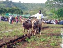 Développer l'agriculture pour relever le défi alimentaire