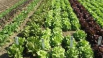 L'agriculture biologique dans la région de  l'Oriental au centre d'une journée d'étude à Oujda