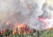 Les incendies de forêt en nette régression