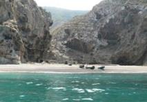 Le parc national d'Al Hoceima subit des pressions humaines