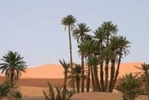 Elever les oasis au rang de patrimoine mondial