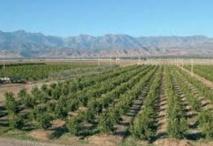 Mobilisation  de plus de 1900 hectares pour les petits projets agricoles