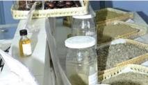 Promouvoir la recherche et le développement des plantes aromatiques et médicinales