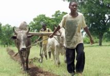 Résilience et sécurité alimentaire font la paire