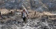 Les forêts précieuses de Birmanie menacées par l'abattage