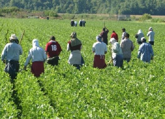 Près de 10.000 travailleurs agricoles de Souss-Massa-Draâ risquent d'être mis au chômage