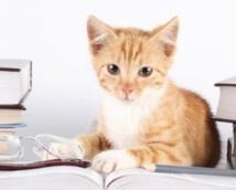 Les gens qui aiment les chats sont plus intelligents que ceux qui aiment les chiens