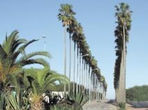 El Jadida fête la semaine de l'environnement