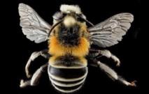 Les araignées au secours des abeilles