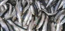 Rencontre de sensibilisation à l'amélioration de la qualité de produits alimentaires