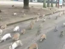 Les habitants peu particuliers de Rabbit Island