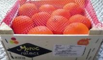Fin de la querelle Maroc-UE à propos de l'accès des fruits et légumes au marché européen