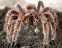 Au Nicaragua, reptiles, amphibiens  et araignées exportés comme animaux
