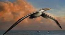 Le plus grand oiseau sort de l'oubli aux Etats-Unis