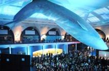 Insolite : Dormir sous une baleine bleue