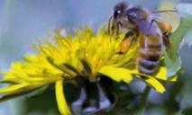 L'avenir des drones dans la biologie des insectes