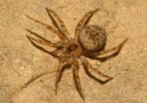 Insolite : Araignée  inédite