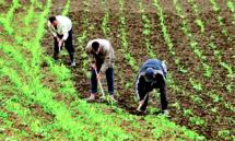 L'AFD plaide pour le maintien de l'emploi en zones rurales