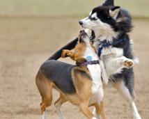 La jalousie est aussi un vilain défaut chez les chiens