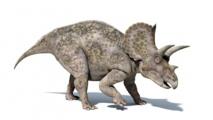 L'ancêtre du tricératops était bipède et pas plus gros qu'un dindon
