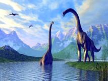 Une seule branche des  dinosaures a évolué pour  devenir les oiseaux modernes
