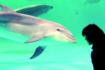 Les dauphins poussent des cris perçants quand ils sont contents