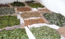 Les plantes aromatiques et médicinales, un patrimoine encore inexploité