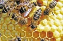 Le miel dans tous ses états à Ida Outanane