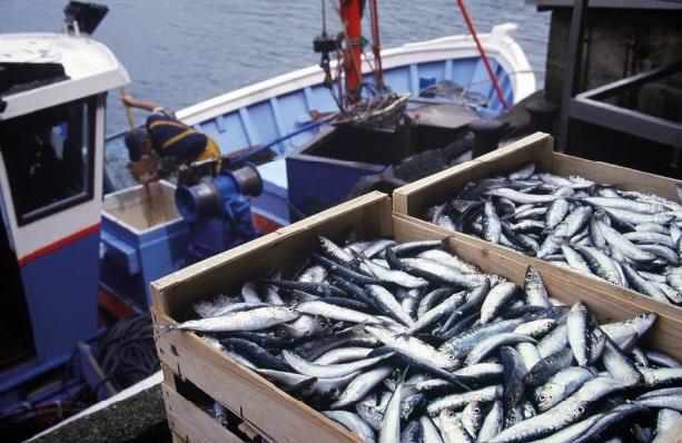 Aziz Akhannouch pêche en eaux troubles